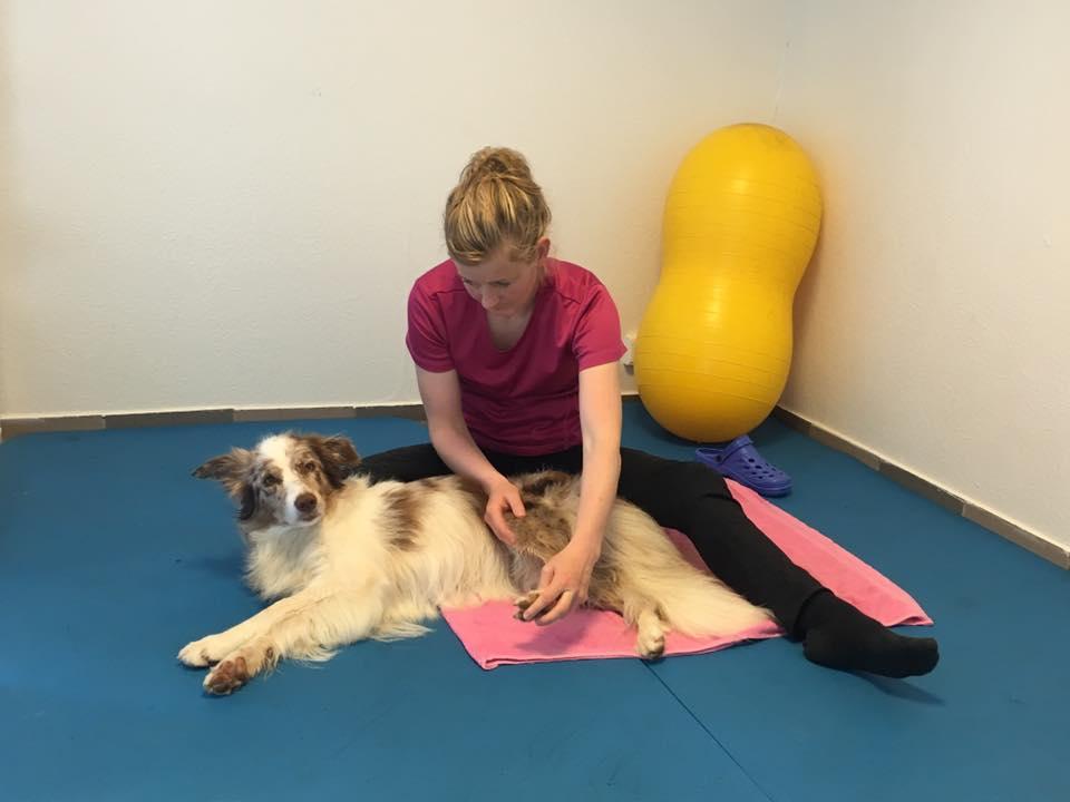 hunder massasje