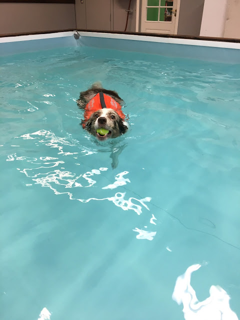 hundesvømming