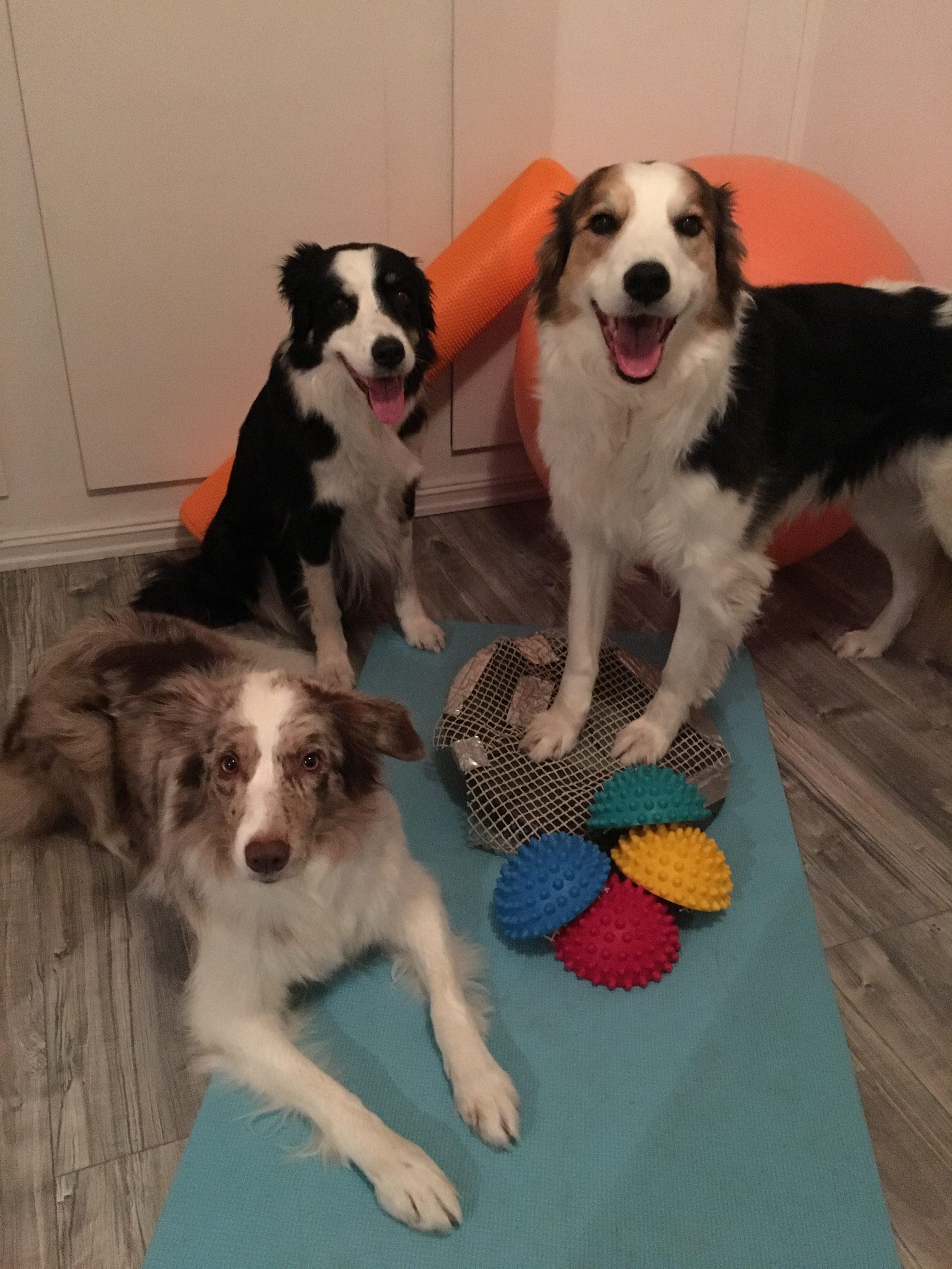 styrketrening for hunder